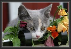 Cissy in den Blumen