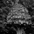 City_Bird