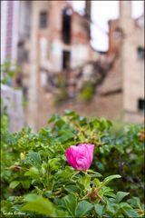 Cityblümchen