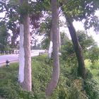 civilization beside nature........