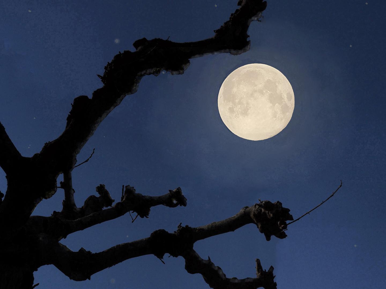 Clair de lune dans mon jardin photo et image | blau ...
