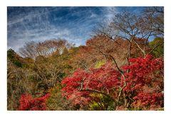 Clear autumn sky 1