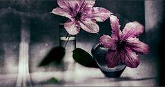 clematis in der vase