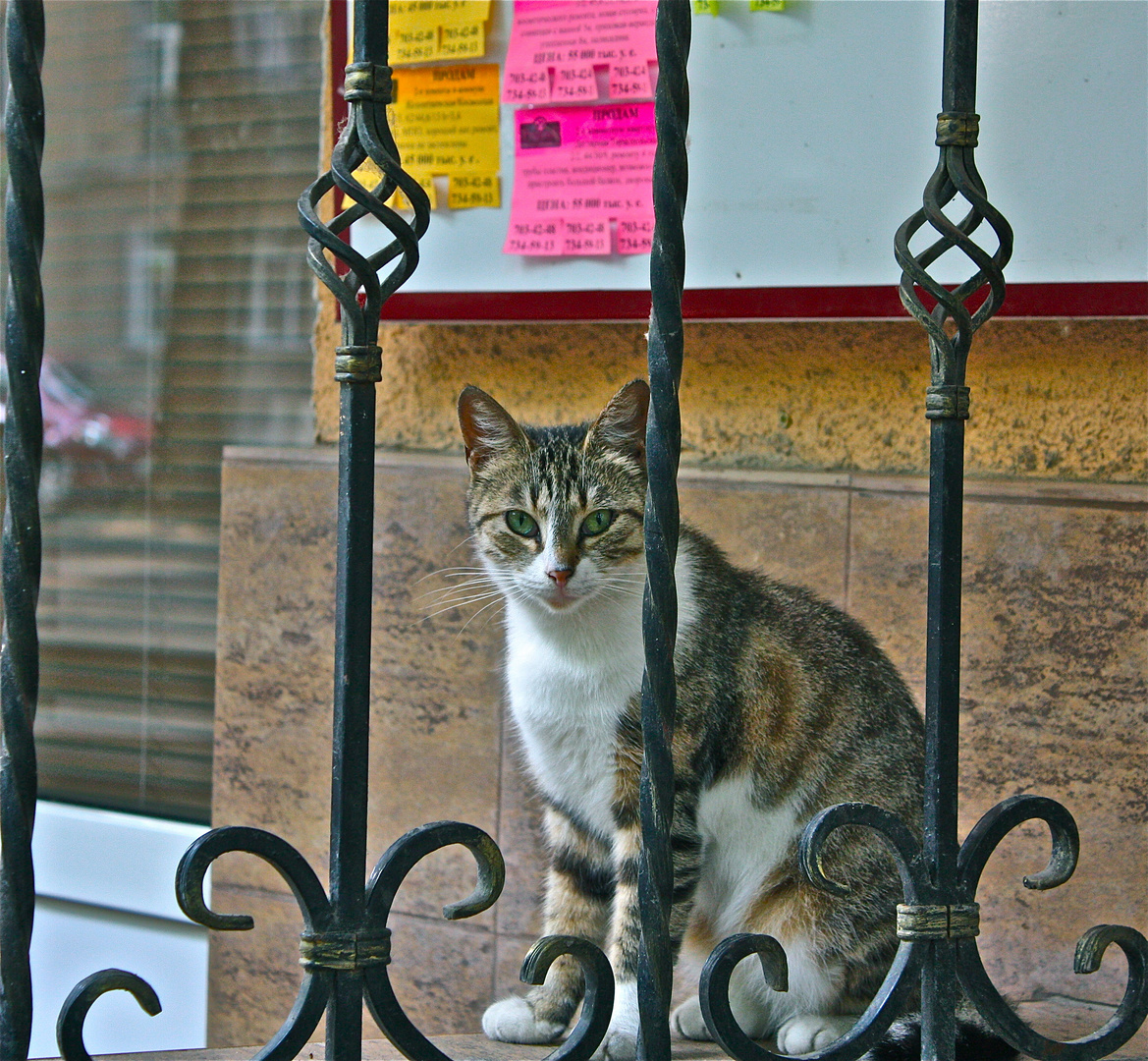 Clever Cat)