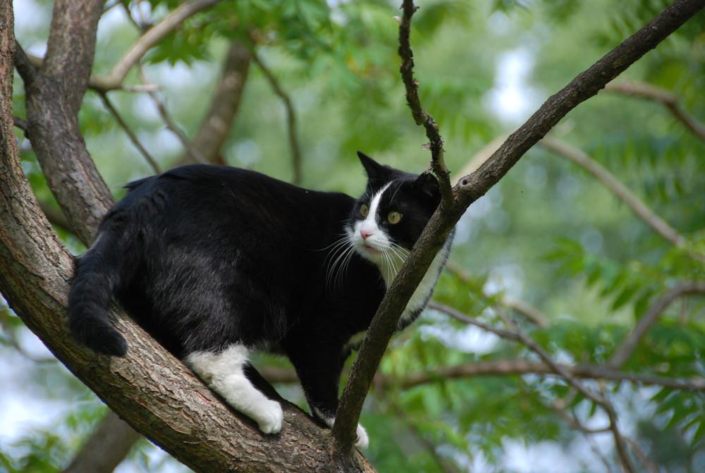 Climbing cat Paula