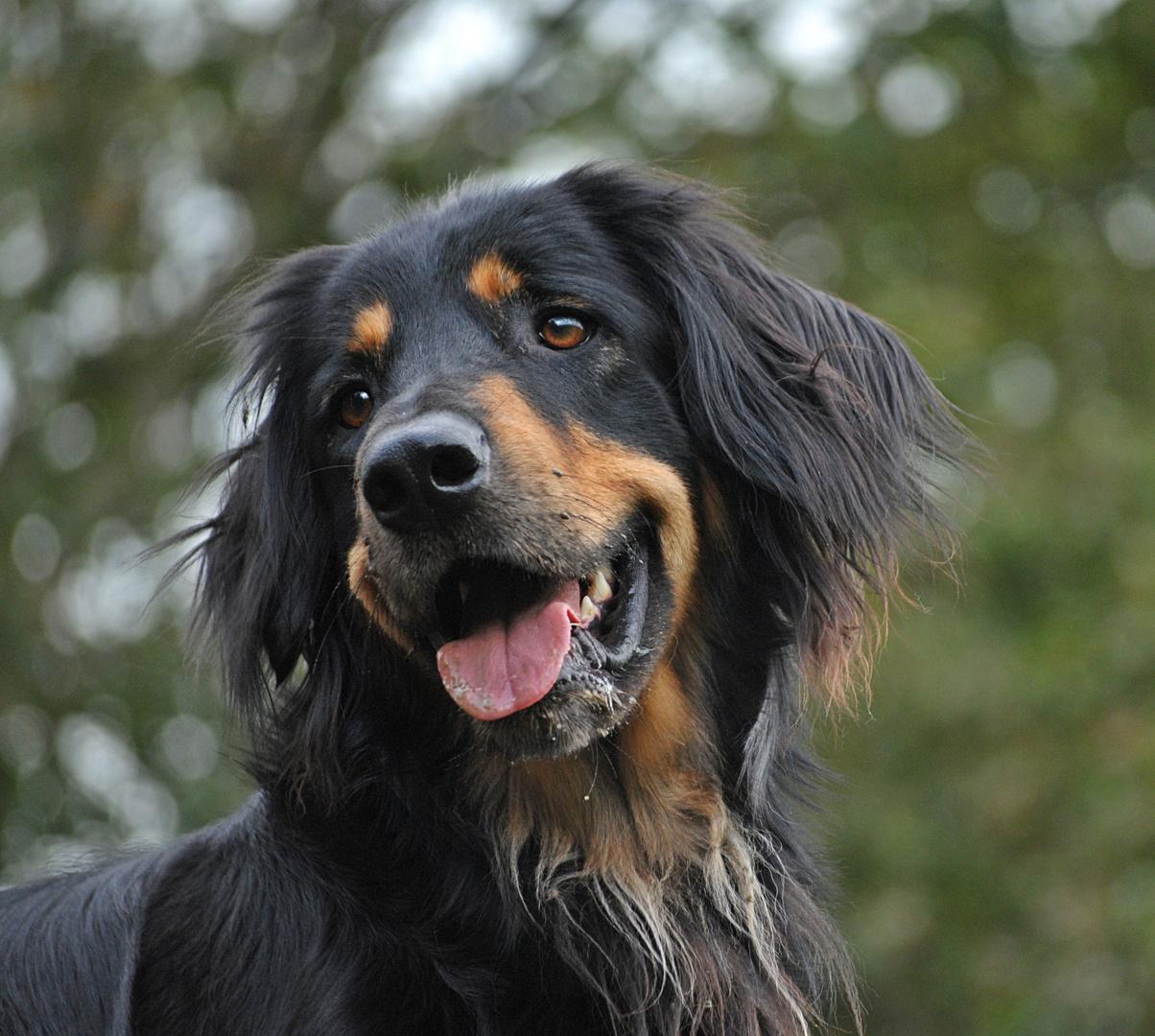Clint, 3 Jahre, einem Hundehasser zum Opfer gefallen