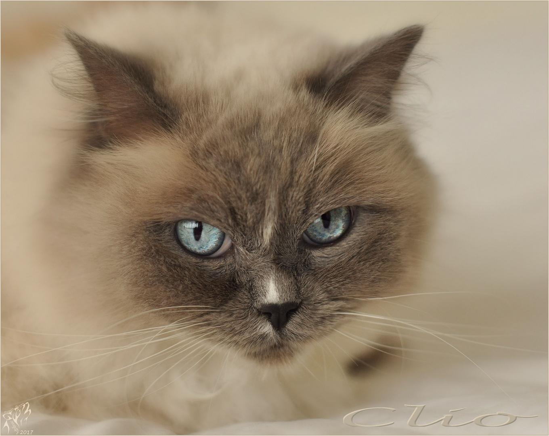 Clio blue eyes ..
