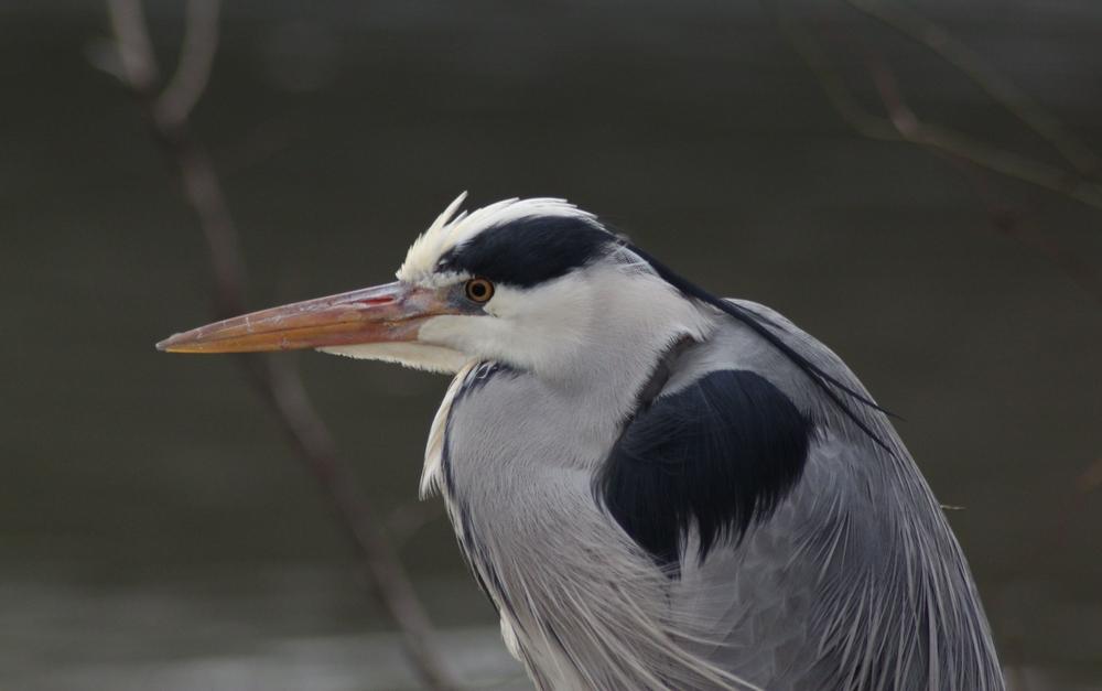 Close encounter with a heron