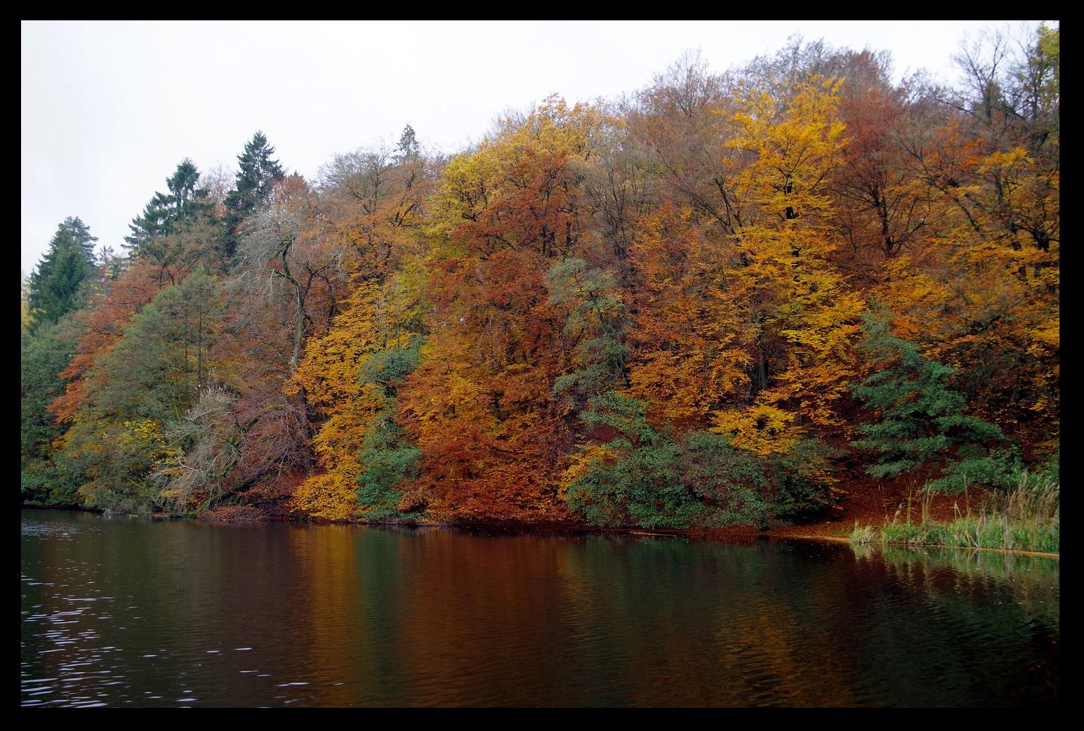 close to Externsteine, NRW, Germany