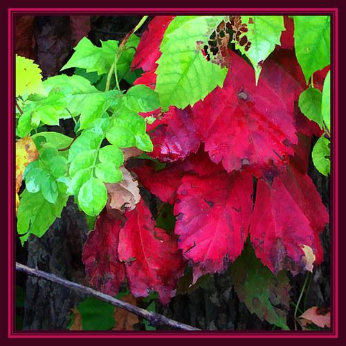 Closer to Autumn