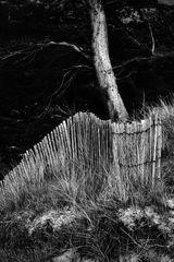 Clôtures et les dunes (3)
