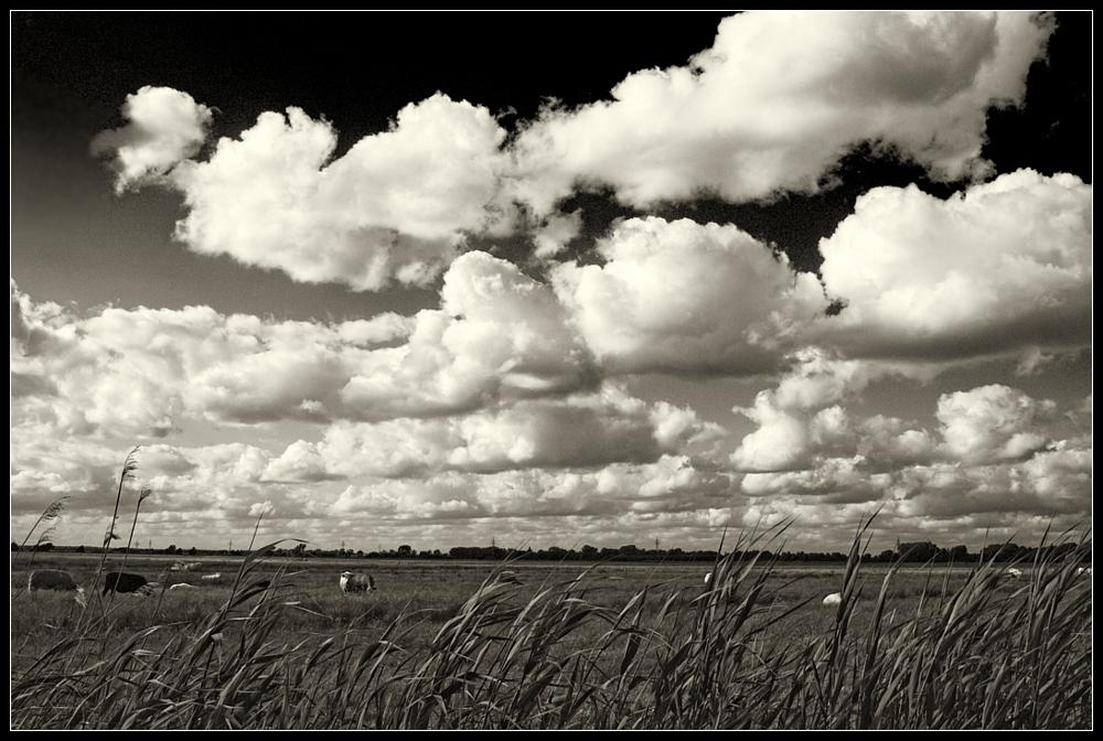 Cloud 'n Cow