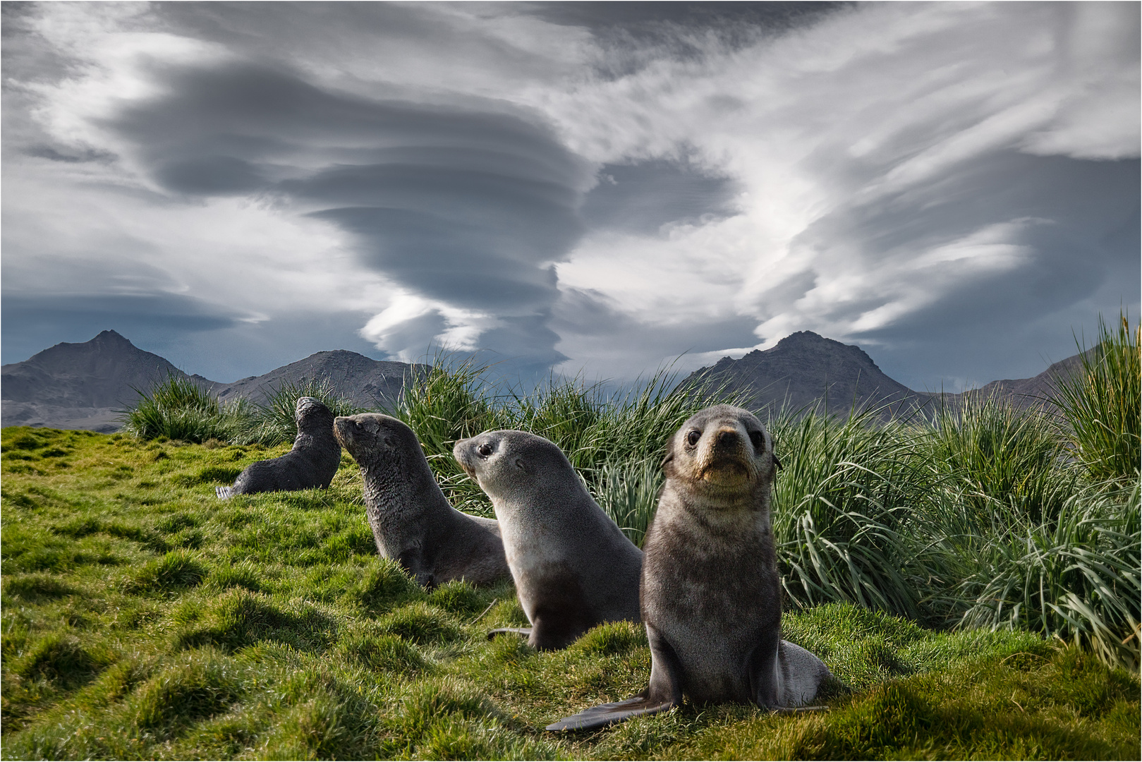 Clouds and Seals