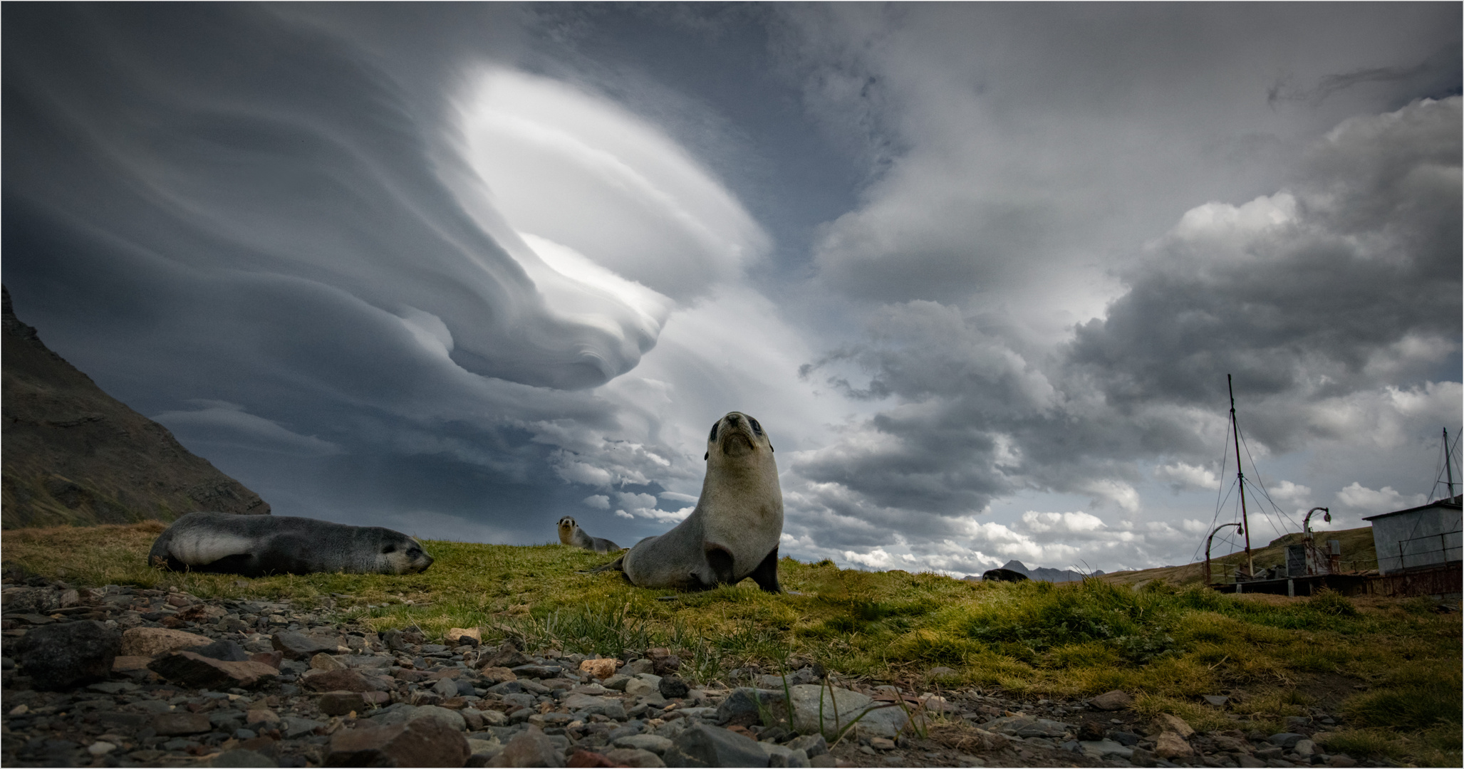 Clouds and Seals III