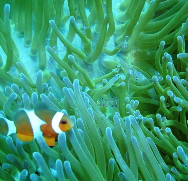 clownfish and ..?
