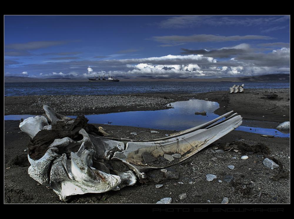 Coast of a whale bone.