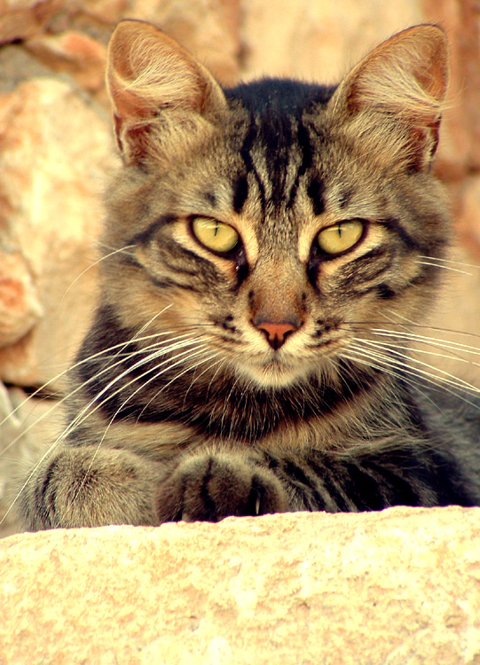 Cocumolo ...il gattino