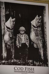 Cod Fish                           DSC_2522-2