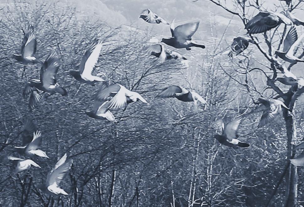 """""""..Codice del volo degli uccelli......"""""""