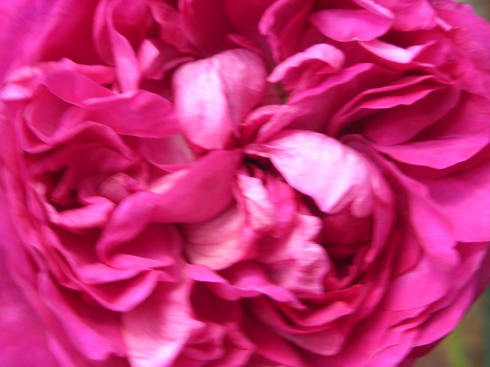 Coeur de fleur ...