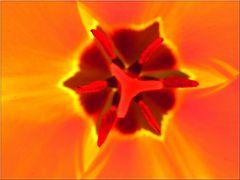 ..Coeur de tulipe (2)..