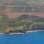 Coffee Fields meet Ocean