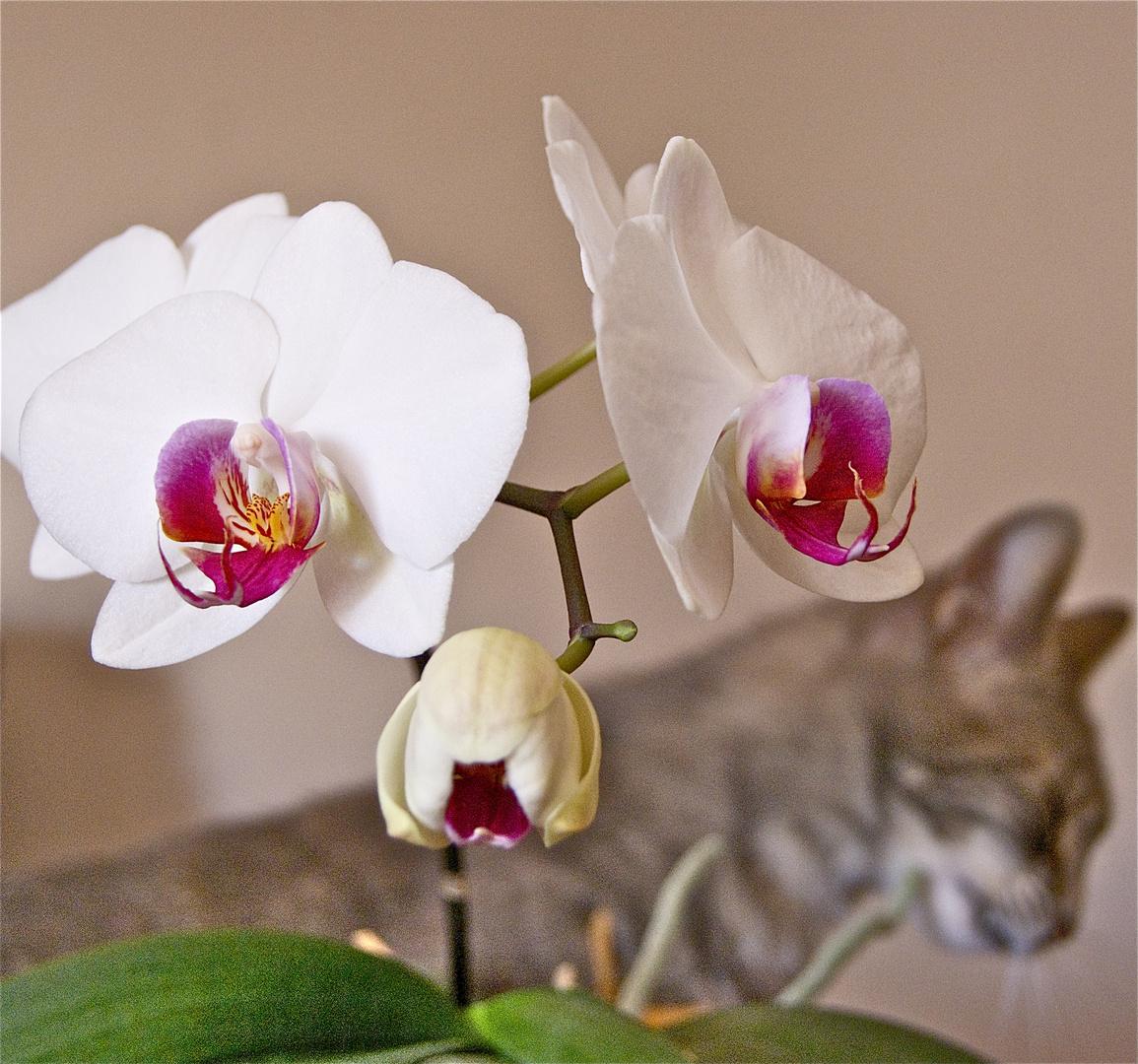 Colarse entre las orquídeas blancas