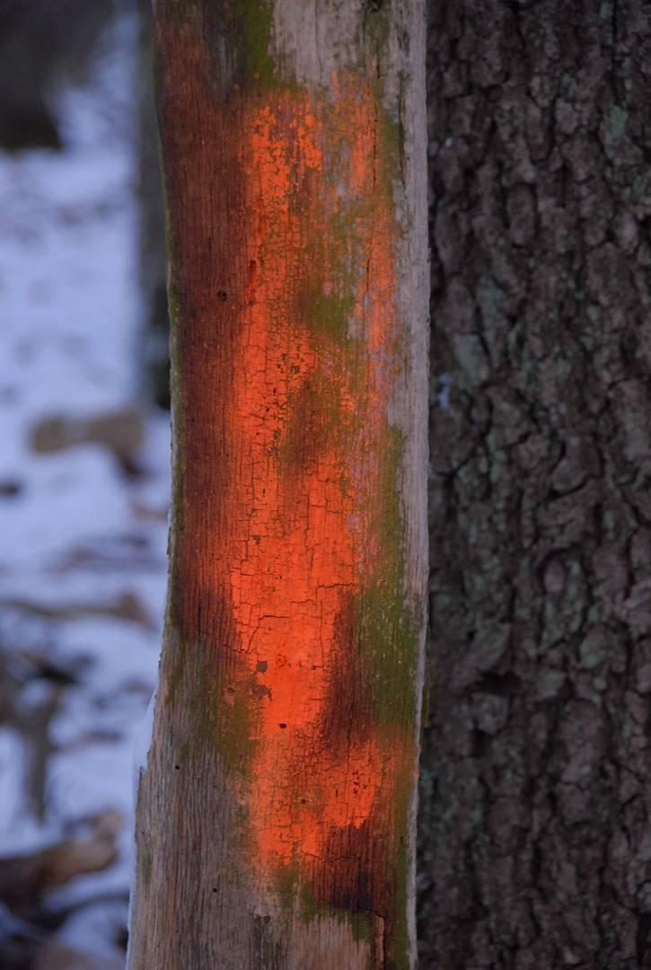 Cold Orange
