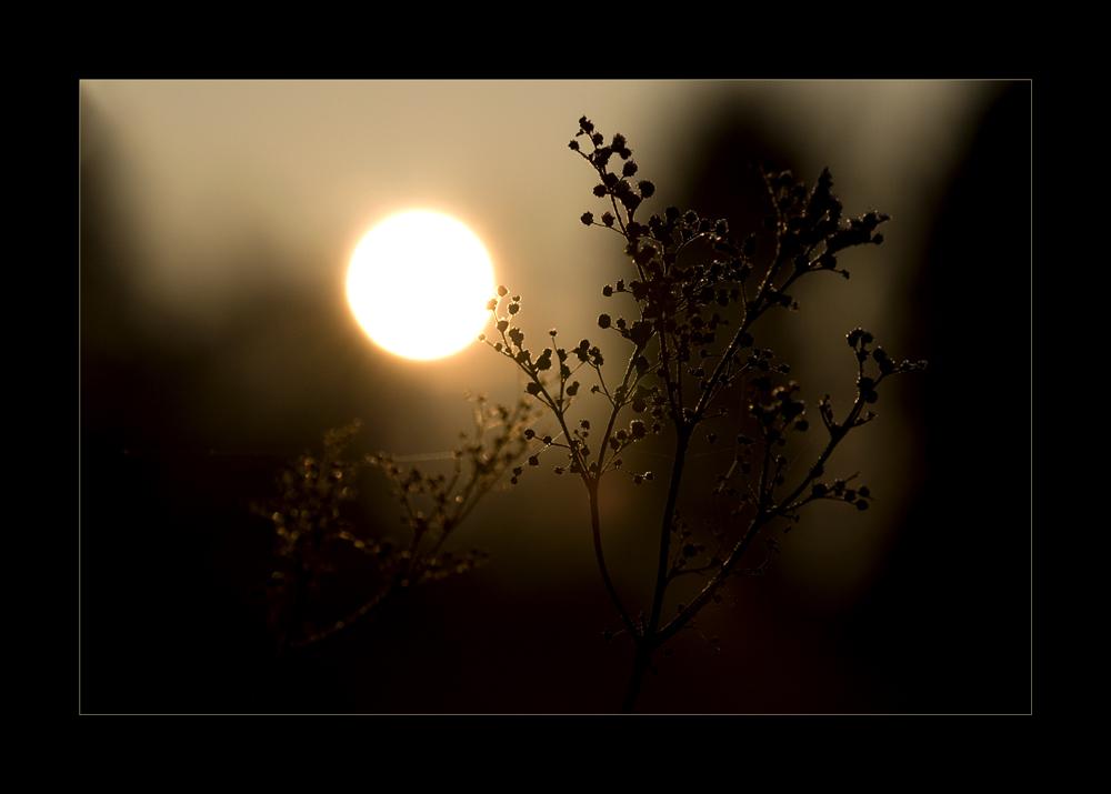 Cold sun......