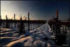 Cold wine