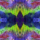 cole colours