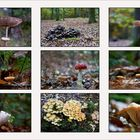 Collage 9 Pilze