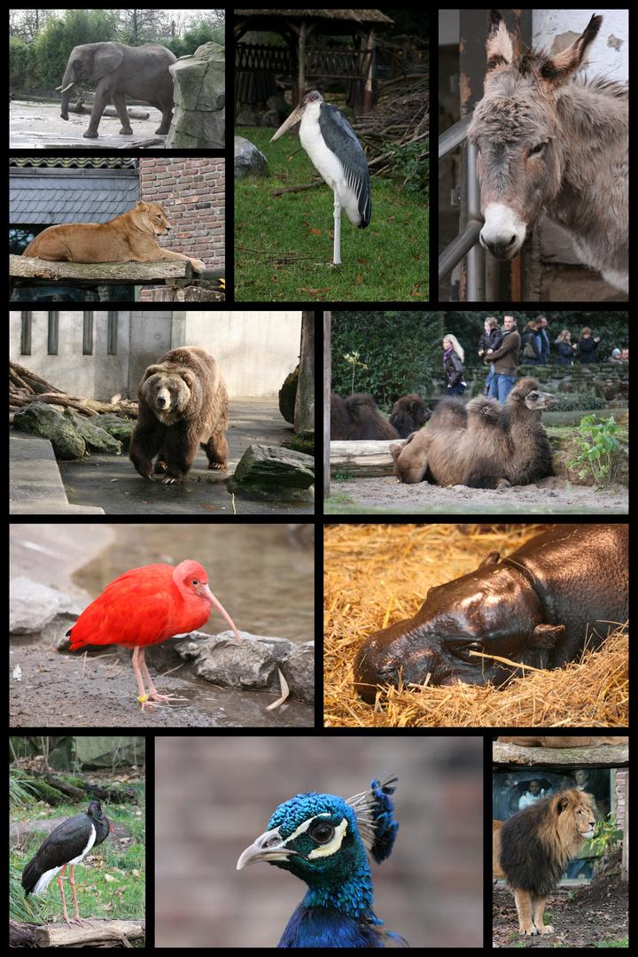 collage aus dem zoo duisburg foto bild tiere zoo wildpark falknerei zoolandschaften. Black Bedroom Furniture Sets. Home Design Ideas