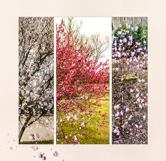 Collage Blühende Bäume