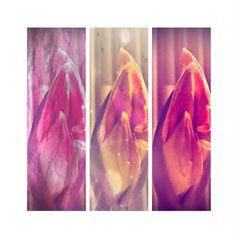 Collage Blütentrio
