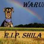 Collage für Shila... ertränkt ! bitte lesen :und reinhören :-(