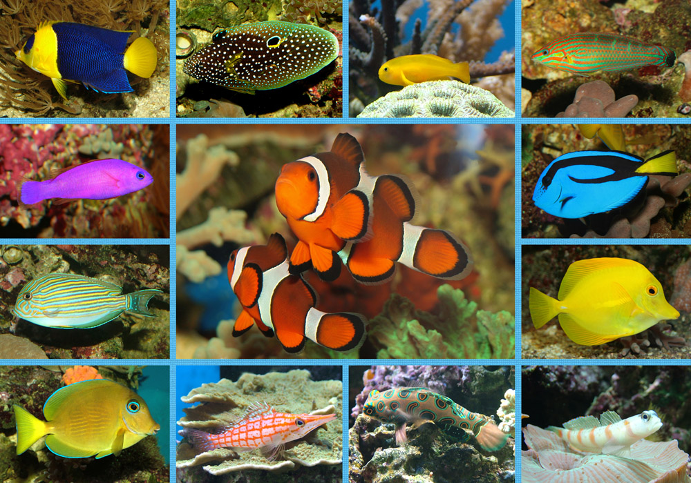 collage meiner aquarienfische foto bild tiere haustiere aquaristik bilder auf fotocommunity. Black Bedroom Furniture Sets. Home Design Ideas