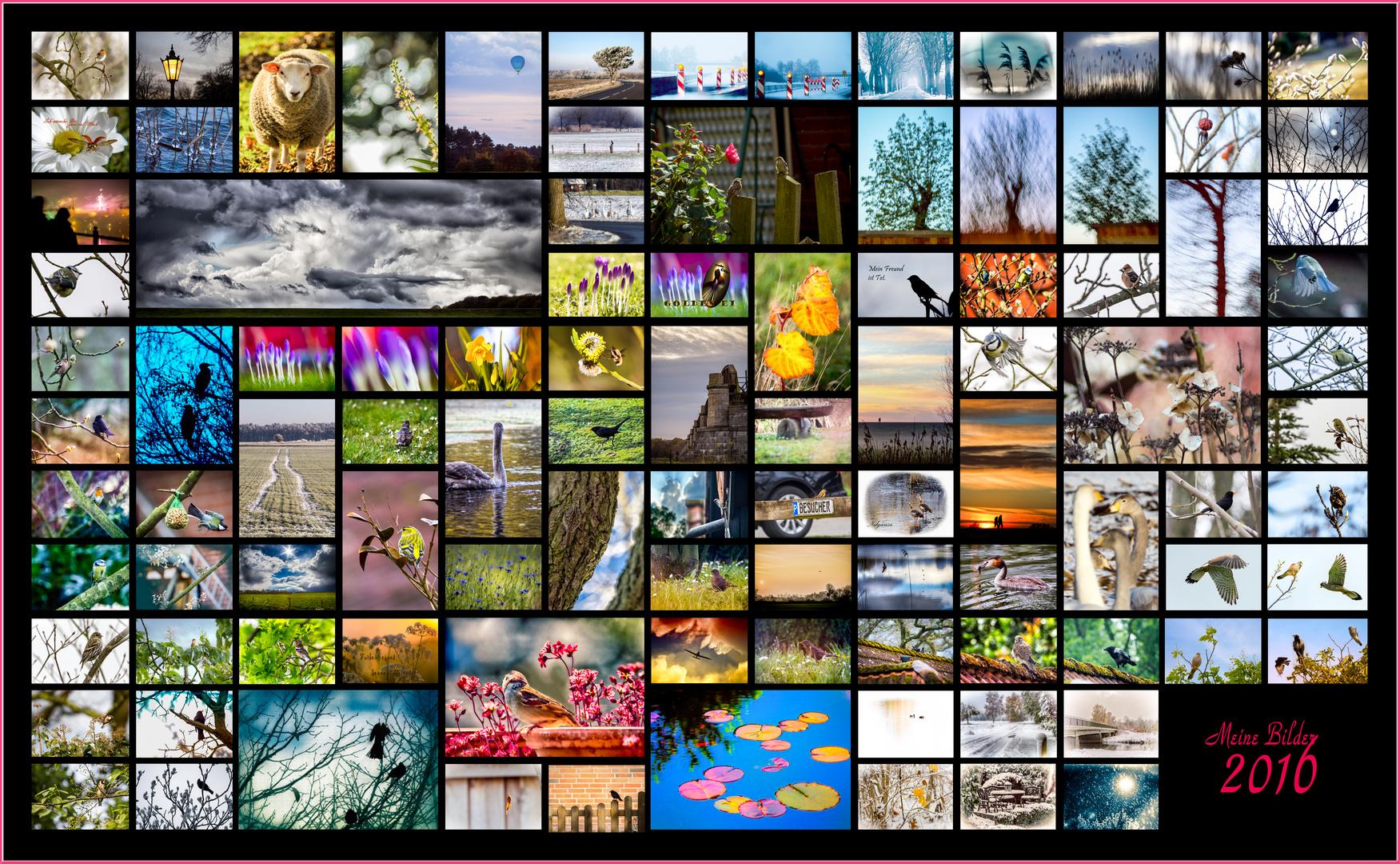 Collage meiner Bilder 2016