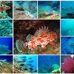 Collage Mittelmeer Fauna