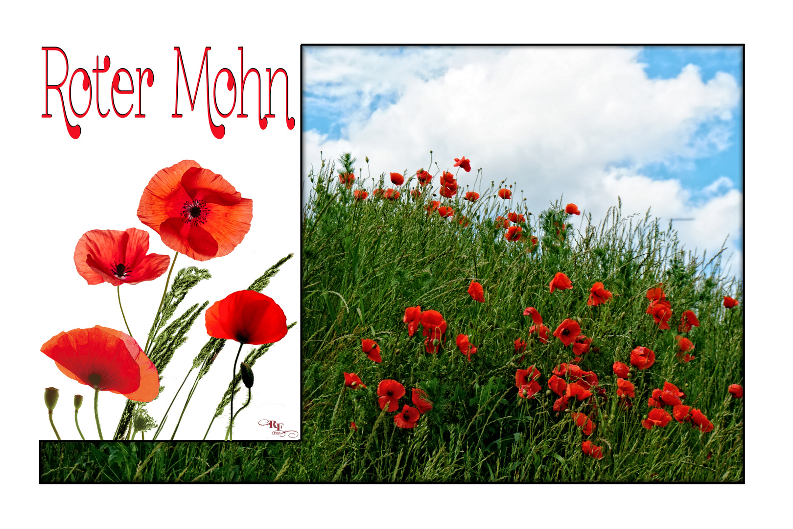 Collage Roter Mohn