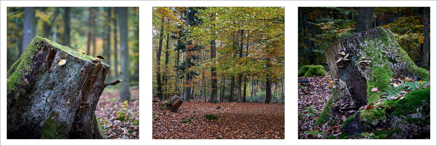 Collage Wald