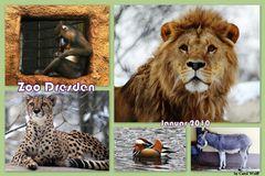 Collage Zoo Dresden (2. Versuch)
