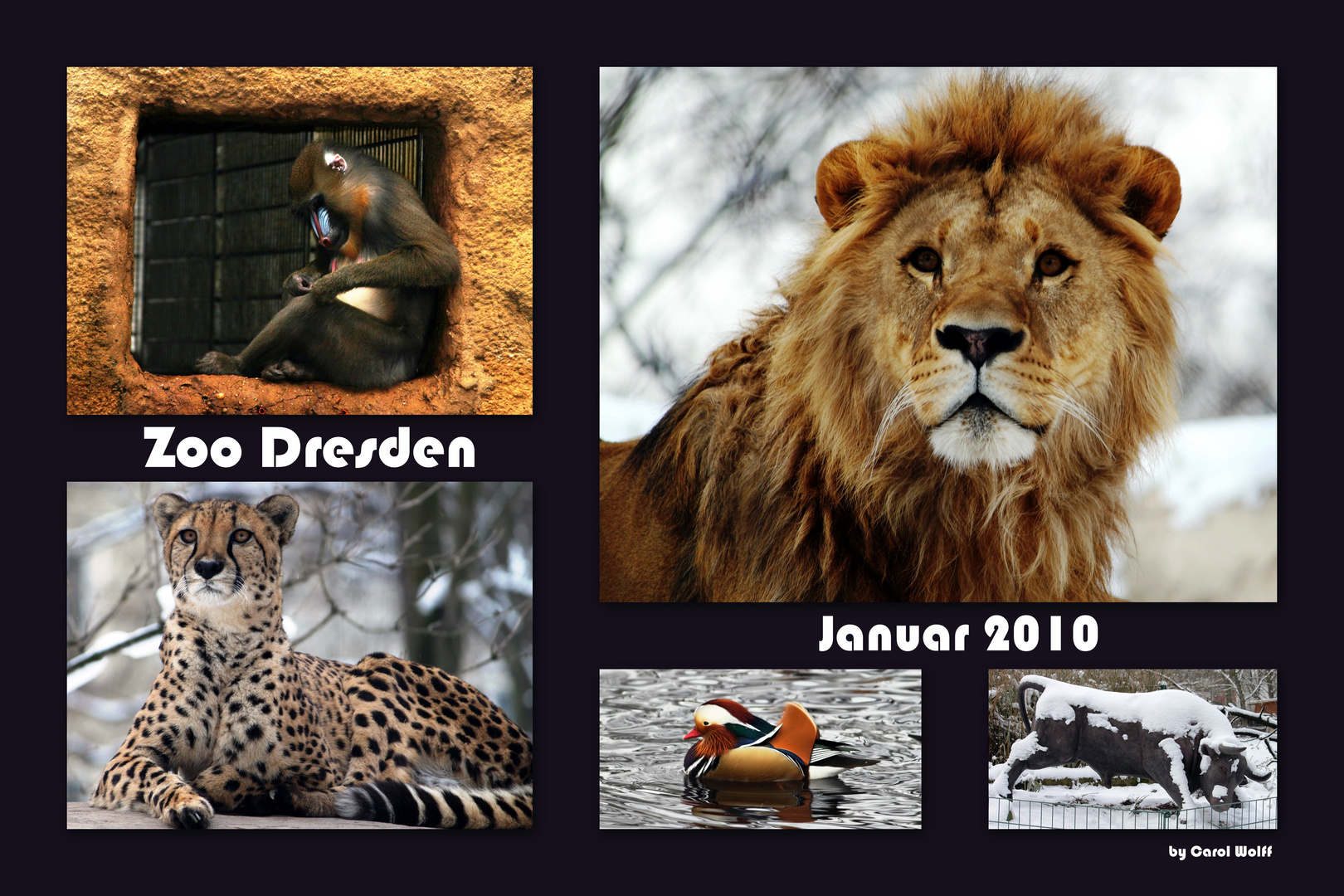 Collage Zoo Dresden