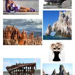 """Collage zu """"Sirene Viola"""""""