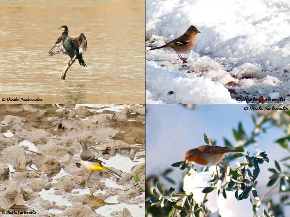 collage...in natura...liberi...