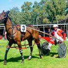 Collie Harness Racing Club