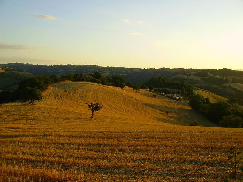 colline di Urbino