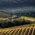 Colline senesi in autunno - Chianti 1