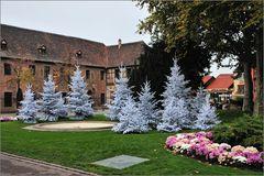 Colmar - Weisse Bäume