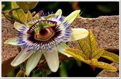 color de flores